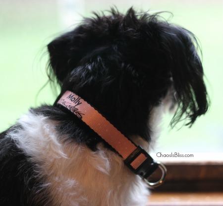 Zazzle Dog Collar
