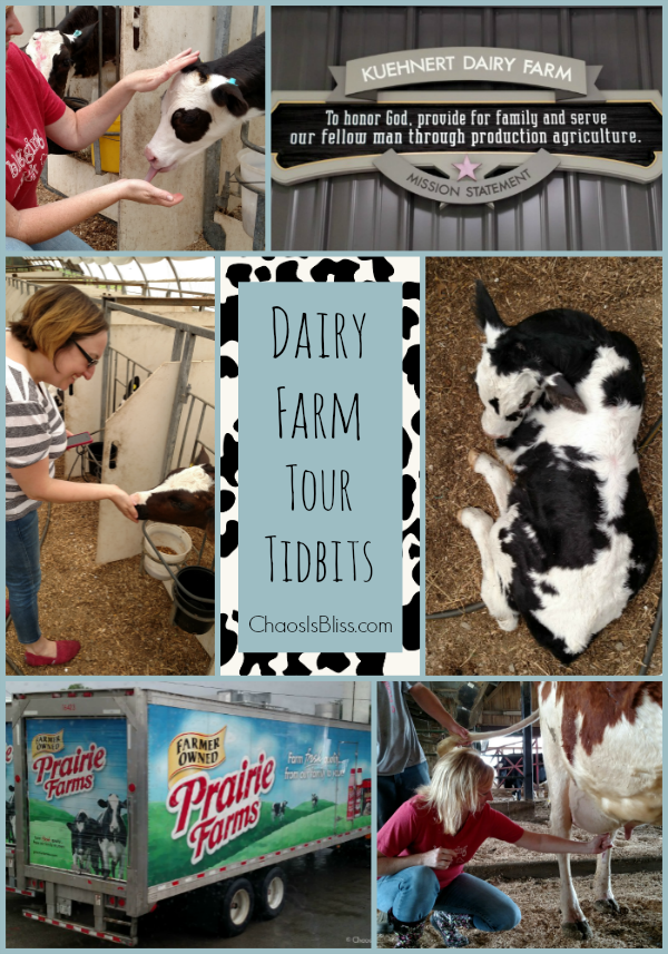 Where does milk come from? Take a dairy farm tour and learn more about dairy, and the technology behind dairy farms.