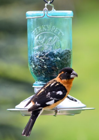 Perky pet mason jar bird feeder