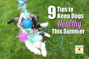 9 Tips to Keep Dogs Healthy During Summer