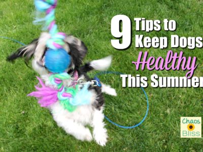 Summer fun can also be hazardous to dogs. Here are a few things to keep in mind to keep dogs healthy during summer months.