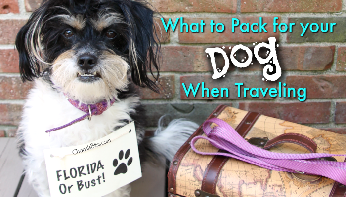 Family Travel | What to Pack for your Dog when Traveling