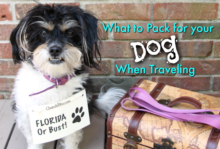 When you head on your next vacation, check these tips on what to pack for your dog when traveling.