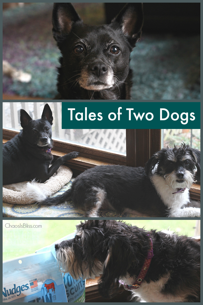 Rescue dogs are loved unconditionally in my family, and I'd love to share with you the tales of two dogs: One rescued from a shelter, and one rehomed.